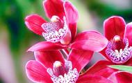 Как ухаживать за орхидеей?