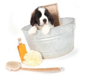 подбор средства для купания пса