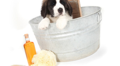 Как выбрать средство для купания собаки?