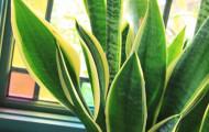 10 растений для ленивых