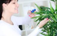 Как защитить растения от сухого воздуха?