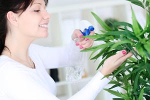 как защитить растения от сухого воздуха