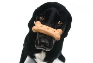 как правильно тренировать собак