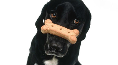 Правильная тренировка собак