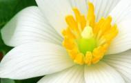 Как правильно выращивать нарциссы?
