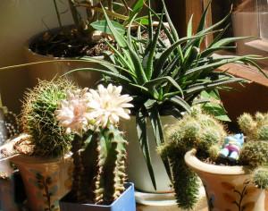 как выбрать здоровое растение
