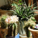 Как выбирать комнатные растения?