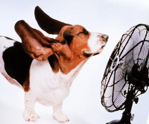 как защитить животных от жары