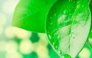 Распознаем проблему по листьям растений