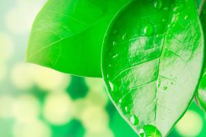 что можно понять по листьям растений