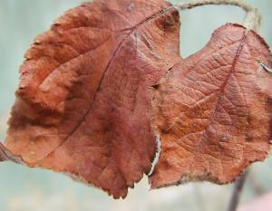 определяем проблему по листьям растений