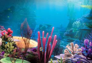 как обустроить аквариум