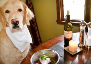 как правильно кормить беременную собаку
