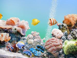 как подготовить воду и грунт для аквариума