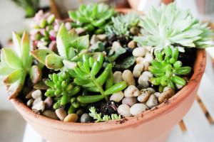 растения и цветы для южного окна