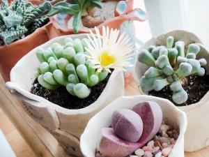 лучшие растения для окон на южной стороне